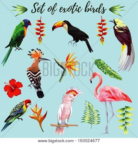 Realistic collection of beautiful exotic tropical birds vector macaw parrot pink flamingo toucan Udot. On a blue background with leaves of palm banana Strelitzia hibiscus flower.