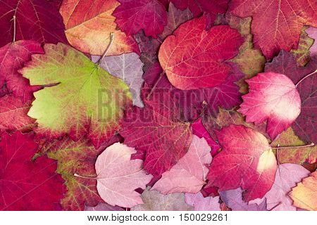 Natural background from autumn beautiful and colourful leaves
