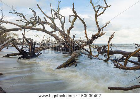 Fallen trees in flood tide in South Carolina