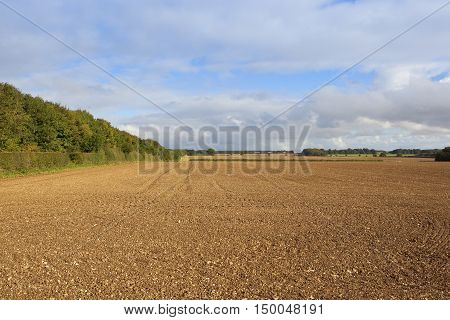 Plowed Field With Leafy Bridleway