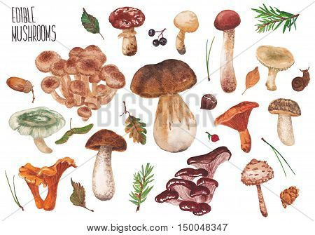 Wild mushrooms on a white background. Many edible mushrooms.