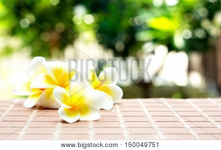 Blooming white Plumeria or Frangipani flowers on the brick floor with blurred green bokeh background.
