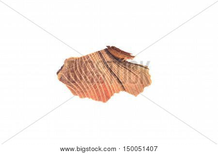 Piece Of Wood Isolated On The White Background.