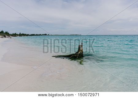Bird on a snag sticking out of the Caribbean waters