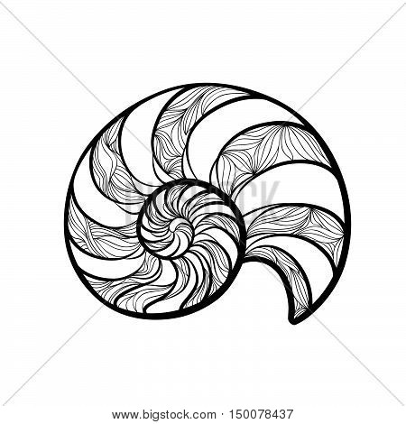 Seashell nautilus. Sea shell set engraved vector illustration isolated on white background. Doodle sea shell. Marine life ornament