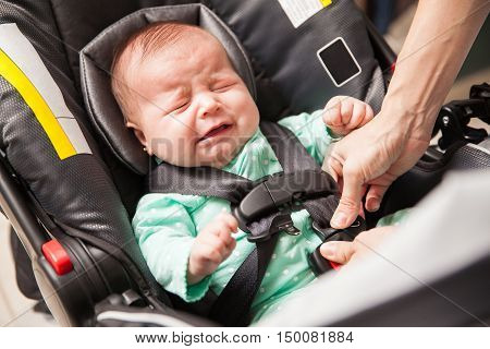 Upset Baby Being Secured In A Carrier