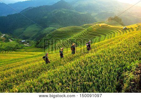 People wolking on the Rice fields terraced of Mu Cang Chai YenBai Vietnam