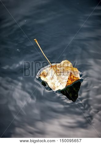 Fine art image of leaf in water. A fine art image of a yellow leaf floating in calm water.