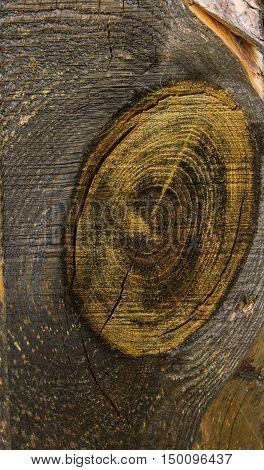 texture old dry charred plank closeup, macro