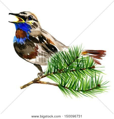 illustration of cute blue bird on branch