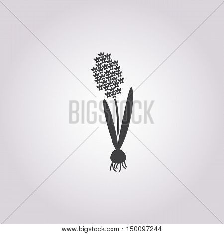 hyacinth icon on white background for web