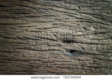 Texture of bark wood (Could be used as background)