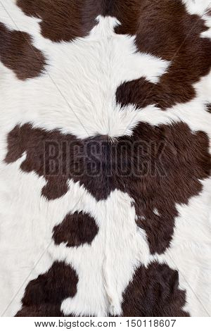 Cow skin texture  on the table in the coffee shop