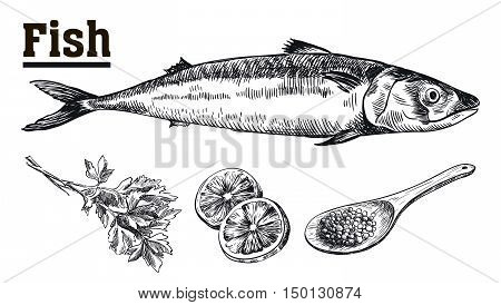 Seafood. Mackerel. Fish and spices. Sketches drawn by hand on a white background