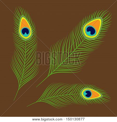 Peacock three feather set collection. Exotic tropical bird colorful tail. Isolated. Brown background. Flat design. Vector illustration