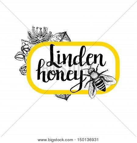 Package for honey bee. Black and white graphic vintage design. Template with linden flowers and bee. Honey pattern in vintage style. Black white retro insect. Drawing line sketch. Vector illustration.