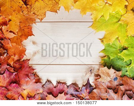 Gradient Of Multicolored Fall Maple Leaves. Autumn Frame