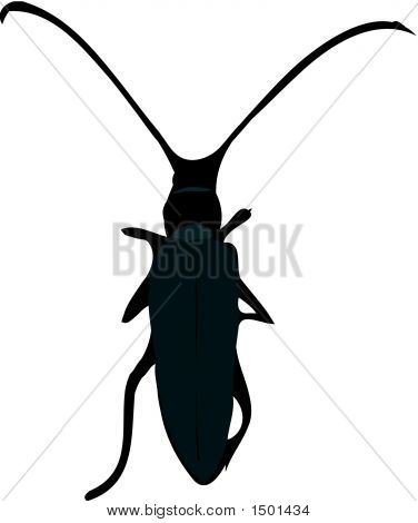 Scalable vectorial image representing a beetle silhouette poster