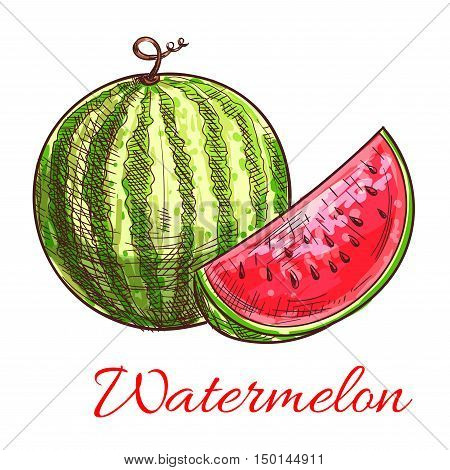 Sketch of watermelon fruit. Striped green watermelon with sweet juicy slice of red flesh. Healthy vegetarian dessert, summer treats, agriculture themes design