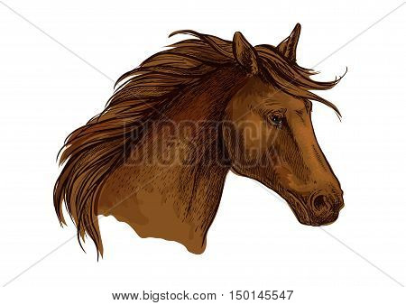 Stallion horse head sketch. Brown purebred arabian racehorse. Equestrian sport badge, horse racing symbol or t-shirt print design