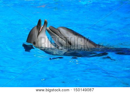 the a two dolphins in blue water