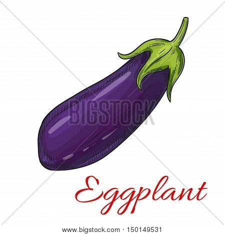 Sketched eggplant vegetable isolated icon. Ripe purple aubergine for vegetarian and healthy food, organic farm and greengrocery market design