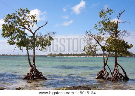 West Coast Mauritius