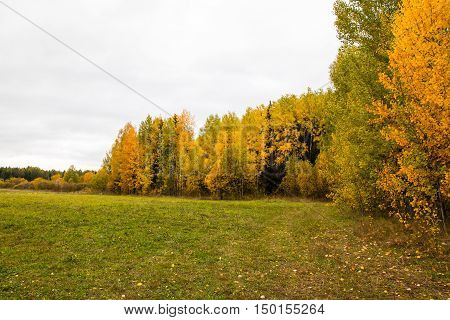 Yellow Field And Forest In An Autumn Day
