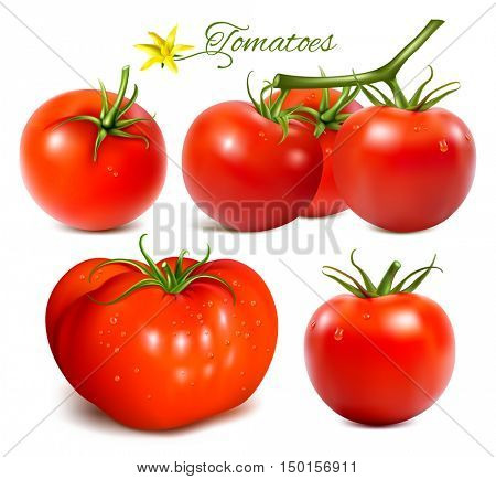 Red ripe tomatoes. Fully editable handmade mesh. Collection of vector illustrations.