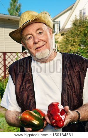 Portrait of a smiling senior man standing in his garden and demonstrating good harvest of sweet pepper. Gardening and vegetable farming. Happy retirement.
