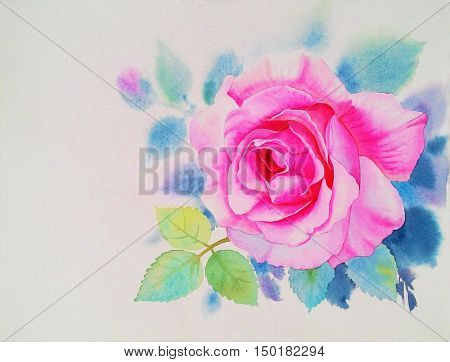 Watercolor painting original realistic flower pink flower of rose and green leaves in white background. Original painting