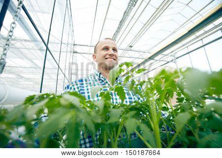 Happy farmer among plants in glasshouse
