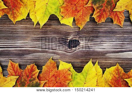 Autumn background. Colorful leaves Autumnal design. Autumn Leaves. Beautiful colors of autumn.