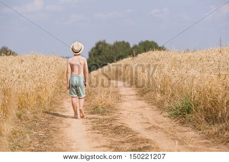 Back view on cute kid boy in straw hat walking along countryside road and holding bunch of wild flowers on sunny summer day. Barefooted Child in the golden wheat field. Lifestyle concept