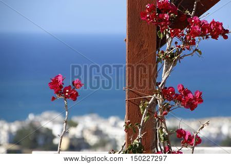 A branch of red oleander encircles brown wooden beams on the background of blue sea.