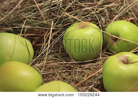Ripe green apples in a basket with straw. Autumn photos