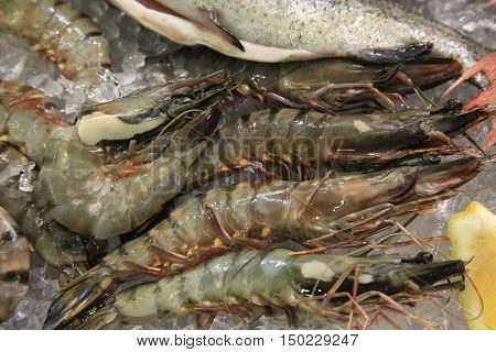 Fresh shrimps on ice cubes. Raw prawns. Exotic food bought at supermarket.