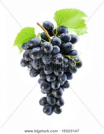grappolo di uva blu isolata on white background
