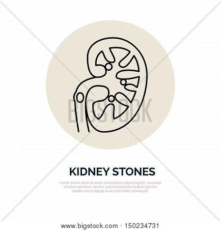 Human organ symbol kidney. Modern vector line icons of urology. Linear medical pictograms for clinic hospital. Kidney pictogram. Kidney stones problem