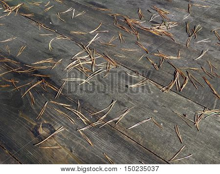 The pine tree needles on the boards