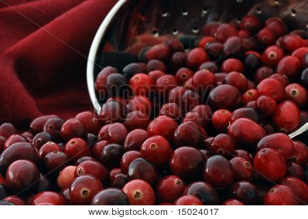 Freshly washed cranberries spilling out of a stainless steel colander.  Macro image with focus on the berries in foreground.  Shallow dof