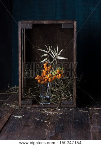 Still life of sea-buckthorn berries in a frame on a dark background