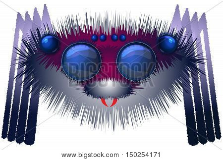 Image of the big hairy spider on white background