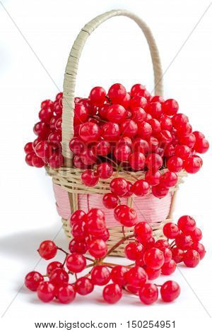 Red Berries Of Viburnum In Small Wicker Basket Isolated