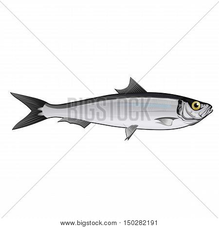 Sardine, isolated raster illustration on white background