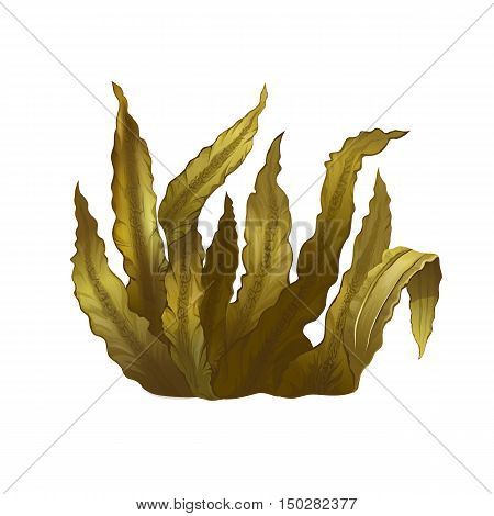 Sea Kelp, isolated raster illustration on white background