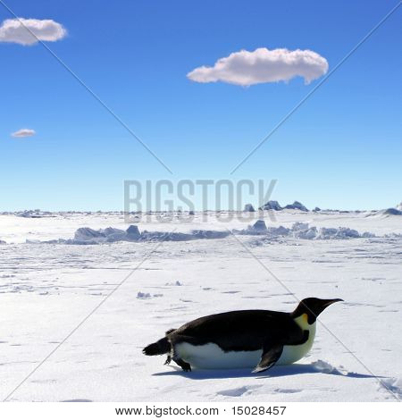 Penguin gliding on its belly through Antarctica