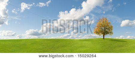 Tree on grass autumn panorama