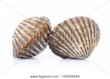 Closeup fresh cockles seafood on white background