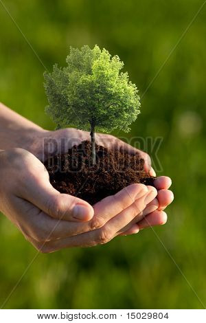 Hands holding soil with a Linden Tree against a green background. Shallow depth of field. Focus is on tree